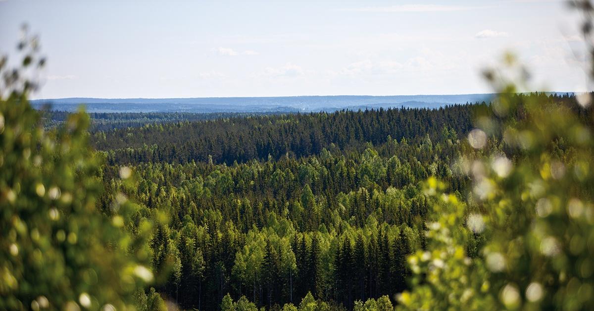 skog_1200x628