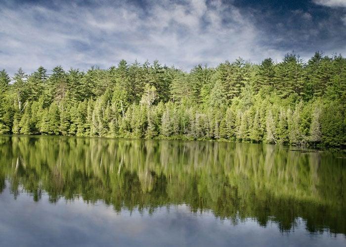 Skogsmarkspriser_skog_vid_sjo_700x500-1