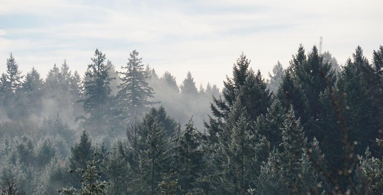 avdragsgilltskog