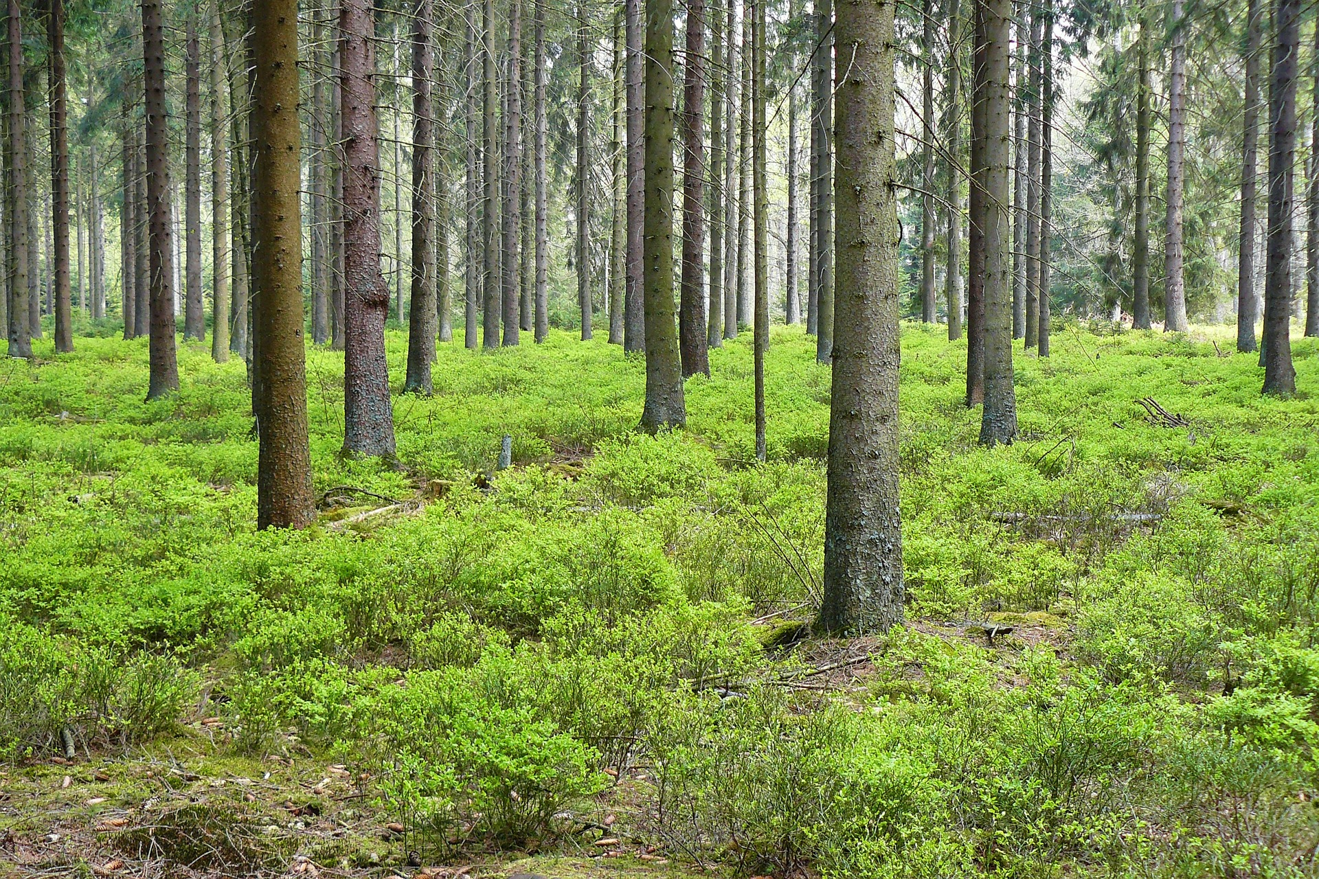 forest-348995_1920