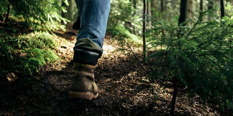 Skogsägarens årsguide kvartal 2