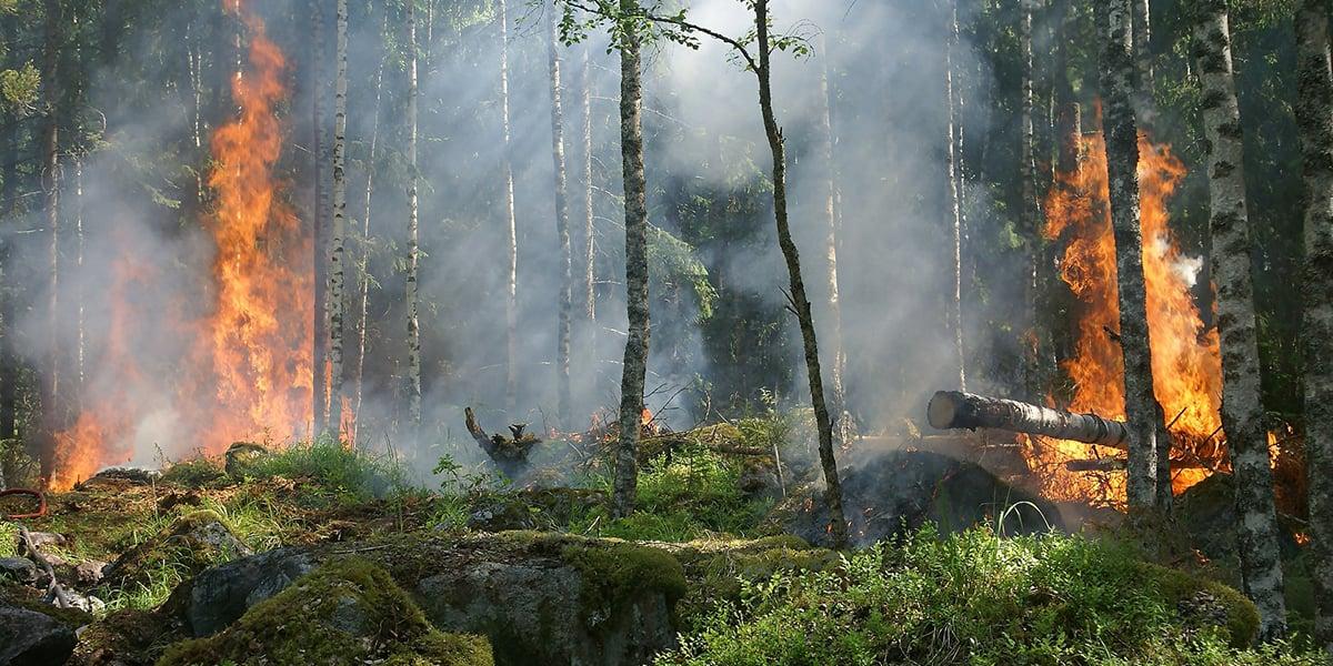 skogsbrand_1200x600