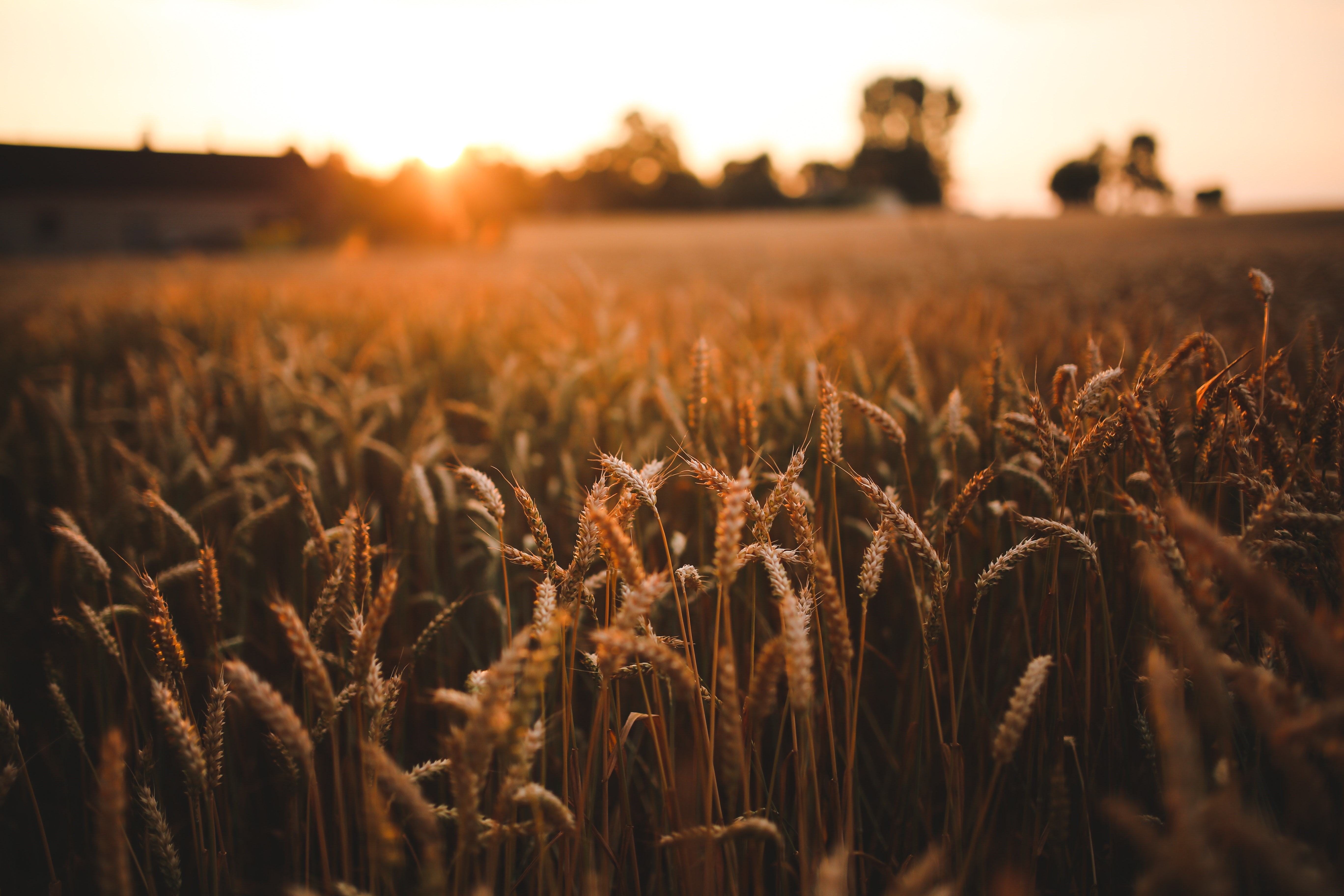 Lantbrukets lönsamhet